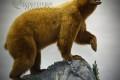 Life size light phase black bear